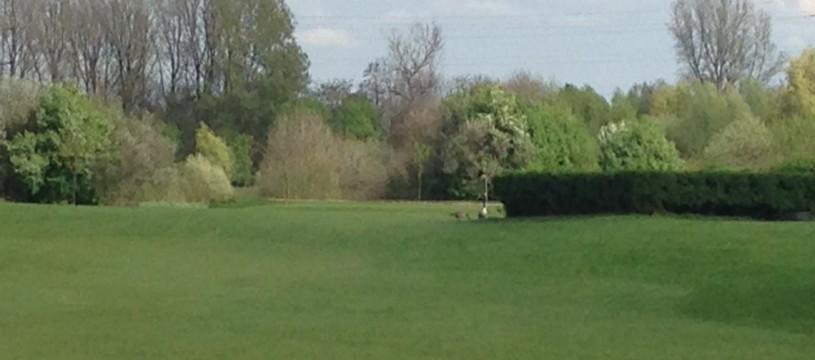 Golfclub Schloss Horst